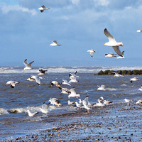 Buy canvas prints of  Seagulls on the Beach, by Lilian Marshall