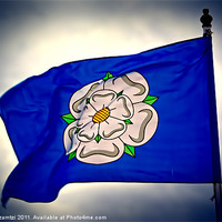 Buy canvas prints of White Rose of York by Maria Tzamtzi Photography