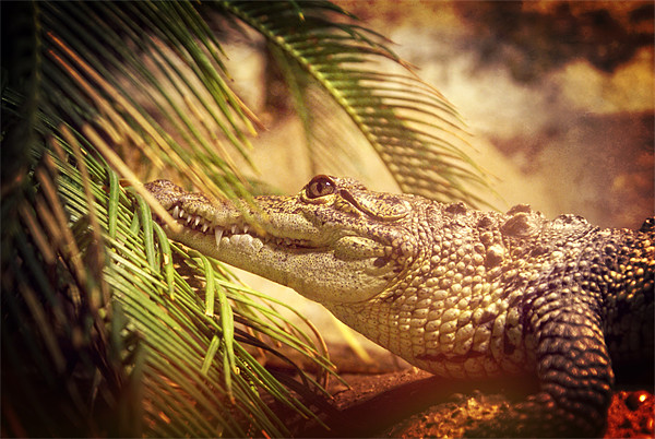 Crocodylus Moreletii Canvas print by Maria Tzamtzi Photography
