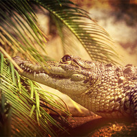 Buy canvas prints of Crocodylus Moreletii by Maria Tzamtzi Photography