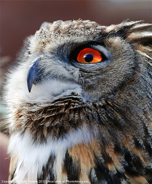 Eurasian Eagle Owl Canvases & Prints Canvas print by Keith Towers Canvases & Prints