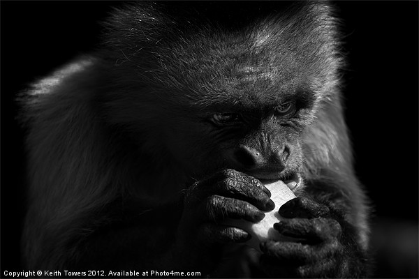 Capuchin Monkey Canvases & Prints Framed Print by Keith Towers Canvases & Prints