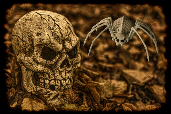 Halloween Skull And Spider Canvas Print by Steve Purnell