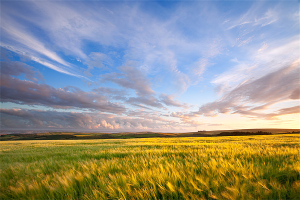 Barley On Willingcott Hill Canvas print by Andrew Wheatley