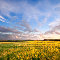 Buy canvas prints of Barley On Willingcott Hill by Andrew Wheatley