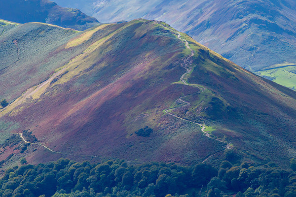 Pathway to Catbells Canvas print by Roger Green