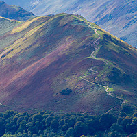 Buy canvas prints of Pathway to Catbells by Roger Green