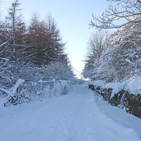 Buy canvas prints of Snow Scene by Dave Parkin