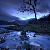 Buy canvas prints of Lochside Tree by Richard Peck