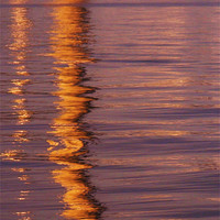 Buy canvas prints of Reflection by Claire Clarke