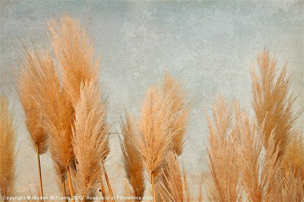 Pampas Grass Canvas print by Martyn Williams