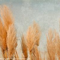 Buy canvas prints of Pampas Grass by Martyn Williams