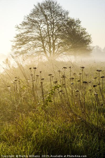 Misty Sunrise Canvas print by Martyn Williams