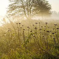 Buy canvas prints of Misty Sunrise by Martyn Williams
