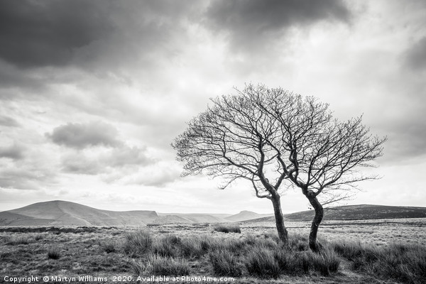 Two Trees, Crookstone Out Moor, Derbyshire Canvas print by Martyn Williams