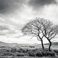 Buy canvas prints of Two Trees, Crookstone Out Moor, Derbyshire by Martyn Williams