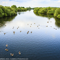 Buy canvas prints of Attenborough Nature Reserve by Martyn Williams