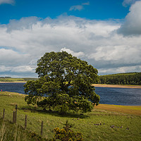 Buy canvas prints of Derwent Reservoir by Timeless Prints