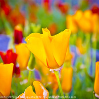 Buy canvas prints of Bright Flower by Kelvin Futcher 2DFaced Photography