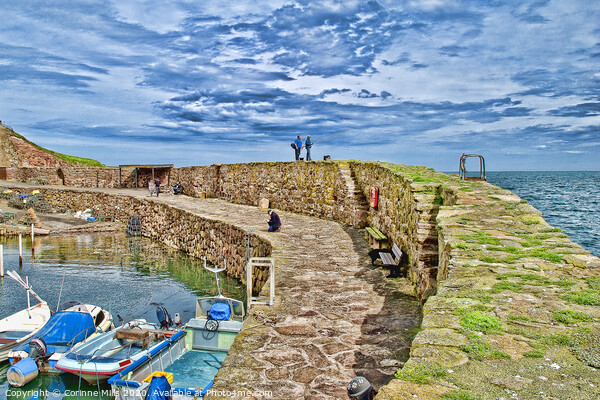 Crail Harbour  Print by Corinne Mills
