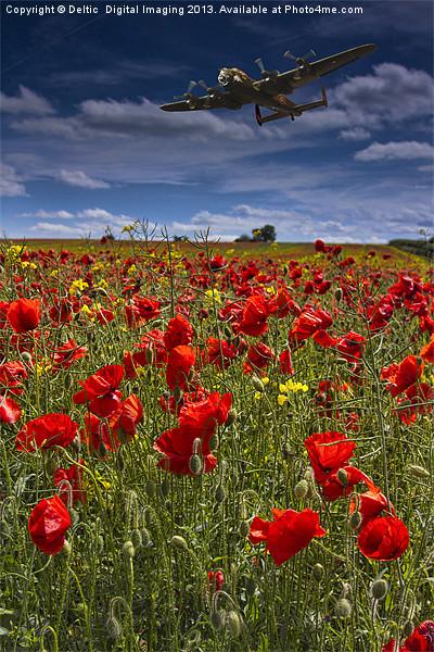Poppies Canvas print by Martin Jones