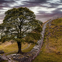 Buy canvas prints of  Sycamore Gap - Iconic Northumbria by Martin Jones