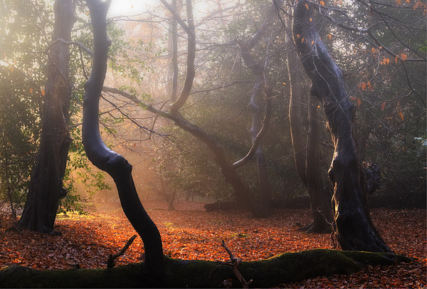 Autumn in Epping Forest Canvas print by Nigel Bangert