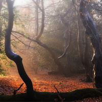 Buy canvas prints of Autumn in Epping Forest by Nigel Bangert