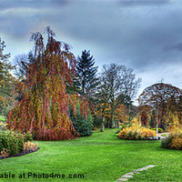 Buy canvas prints of Harlow Carr Panorama by Colin Metcalf