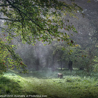 Buy canvas prints of Misty Memories by Colin Metcalf