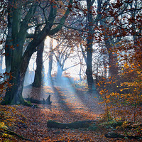 Buy canvas prints of Chevin Forest Park #2 by Colin Metcalf
