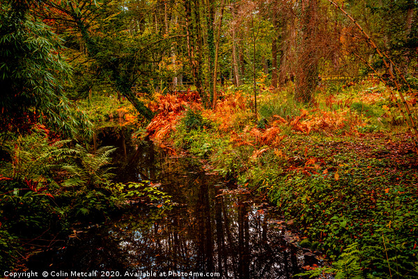 Woodland Stream in Autumn Canvas print by Colin Metcalf