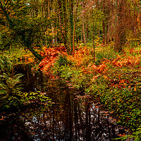 Buy canvas prints of Woodland Stream in Autumn by Colin Metcalf