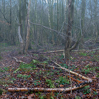 Buy canvas prints of Misty Winter Woodland by Colin Metcalf