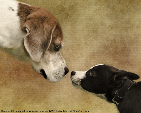 Nose To Nose Dogs Canvas print by linsey williams canvas and prints