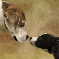 Buy canvas prints of Nose To Nose Dogs by linsey williams canvas and prints