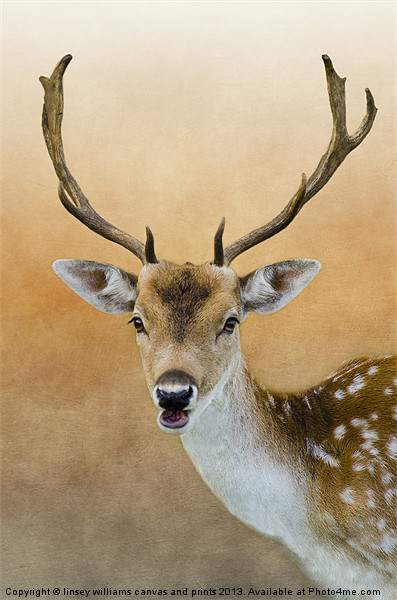 Fallow Deer Stag Canvas print by linsey williams canvas and prints