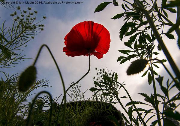 Poppy Memories Canvas print by Iain Mavin