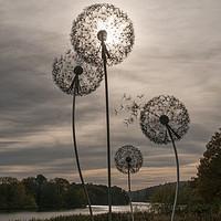 Buy canvas prints of Dandelion Sun by Iain Mavin