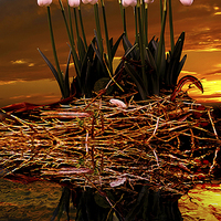 Buy canvas prints of Sunset Snow Drops by Nigel  Hatton