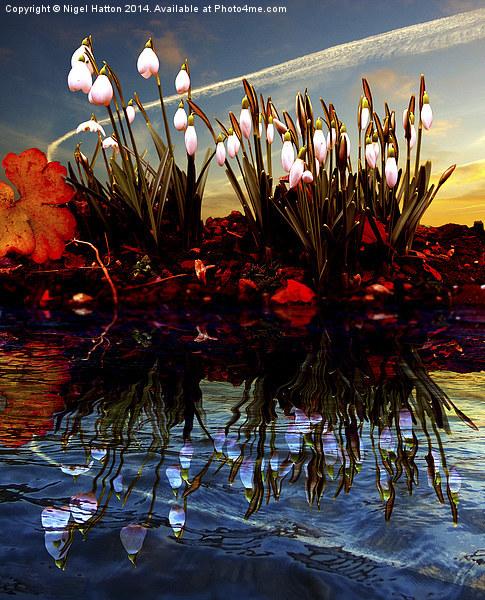 Snow Drop Reflections Acrylic by Nigel  Hatton