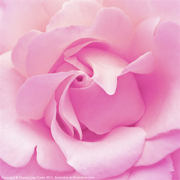 Pink rose Canvas print by Sharon Lisa Clarke