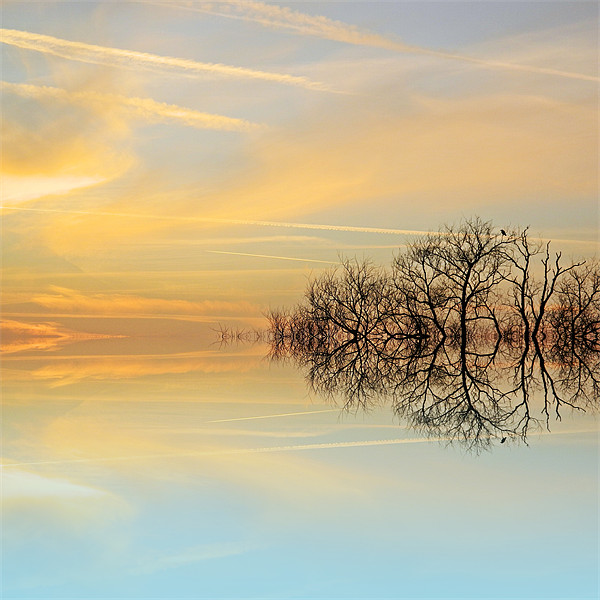 Heavenly branches Canvas Print by Sharon Lisa Clarke