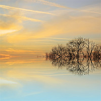 Buy canvas prints of Heavenly branches by Sharon Lisa Clarke