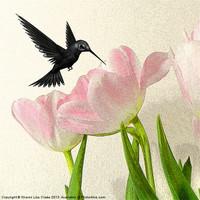 Buy canvas prints of Hummingbird by Sharon Lisa Clarke