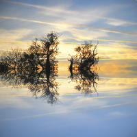 Buy canvas prints of  Criss cross skies by Sharon Lisa Clarke