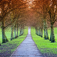 Buy canvas prints of Path To The Castle by Valerie Paterson