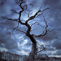 Buy canvas prints of Winter Tree by Andy Stafford