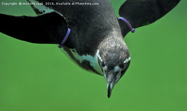 penguin underwater Framed Print by michelle rook