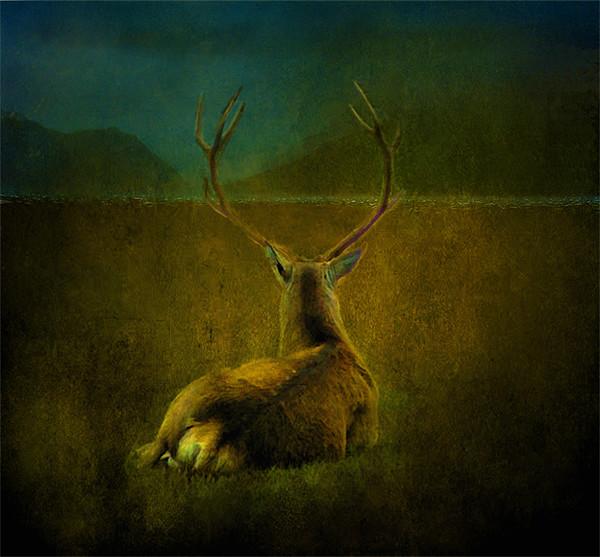 Deer Canvas print by Debra Kelday